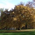 Herbst am Stadtpark