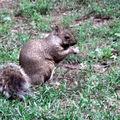 Caisse d'épargne l'écureuil (4)