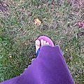 Quelques pas au jardin...