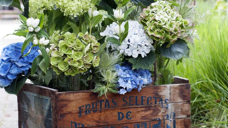 08105606-photo-presentation-florale