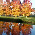 C'est l'automne .....