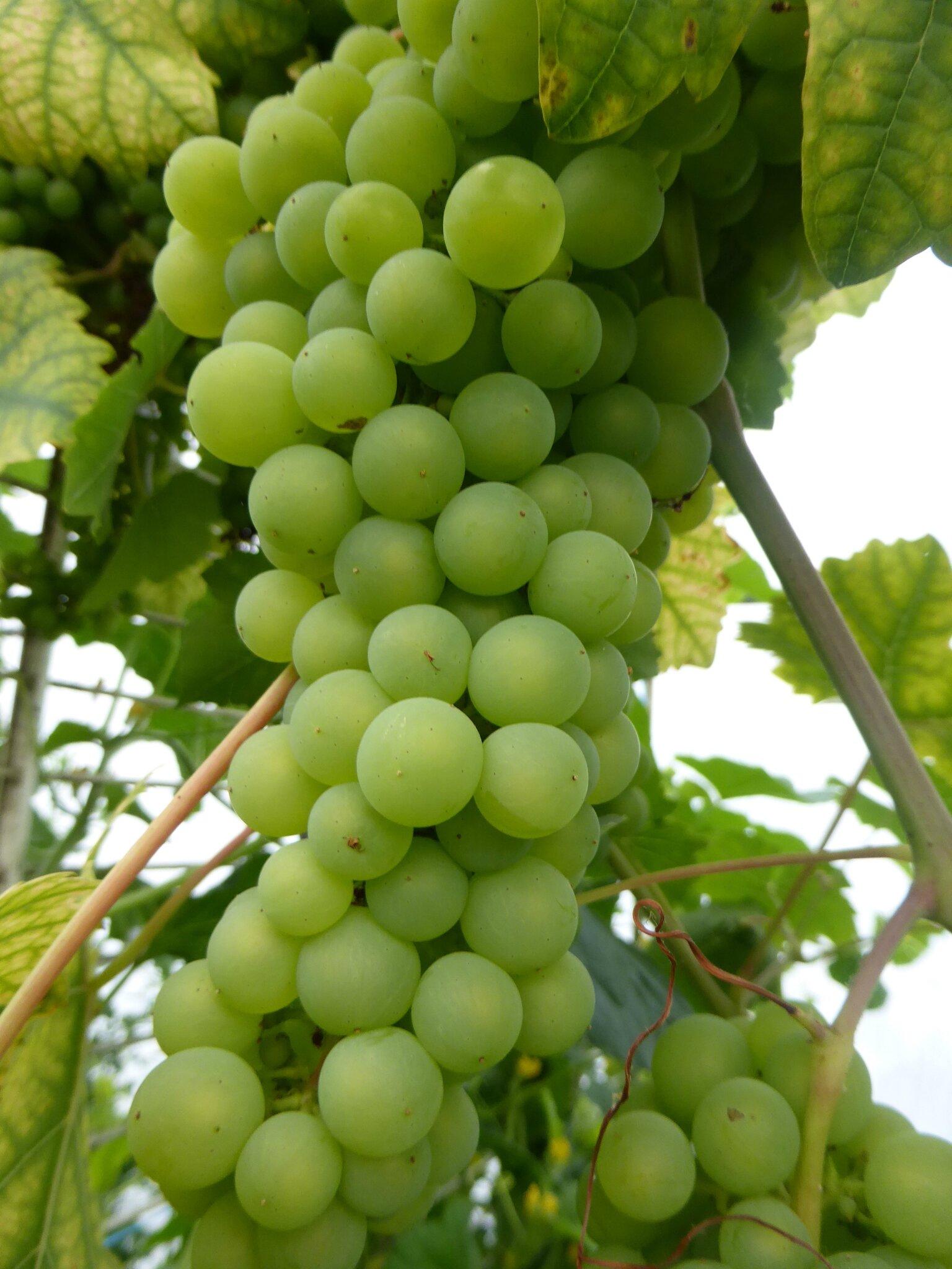 24-raisins (6)