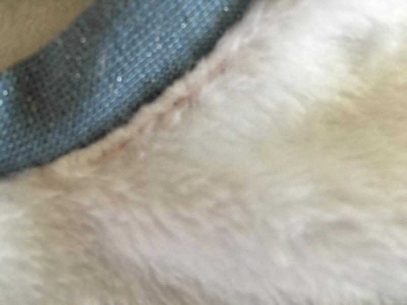 sweat douillette blanche et bord cote tubulaire lurex bleu modele morganours de aime comme marie 4 ans 5