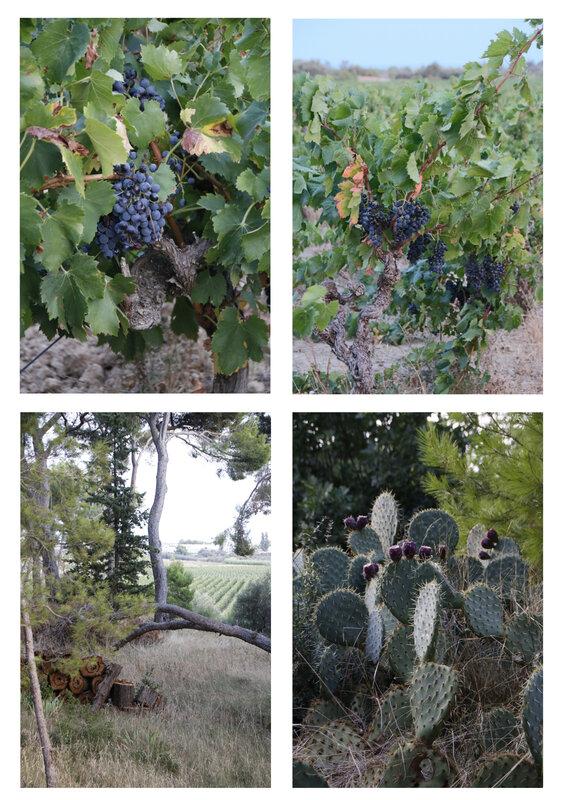 Vigne et cactus