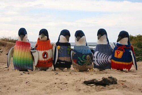 Penguins_in_Sweaters_medium
