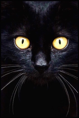 chat yeux 1