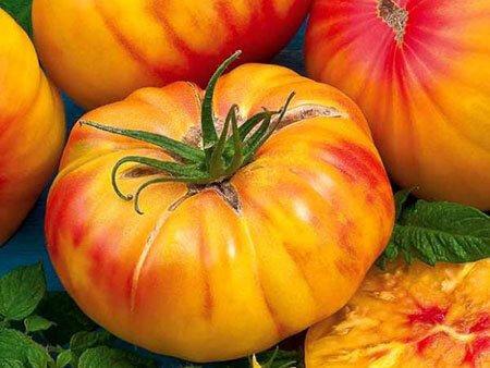 Tomate 4