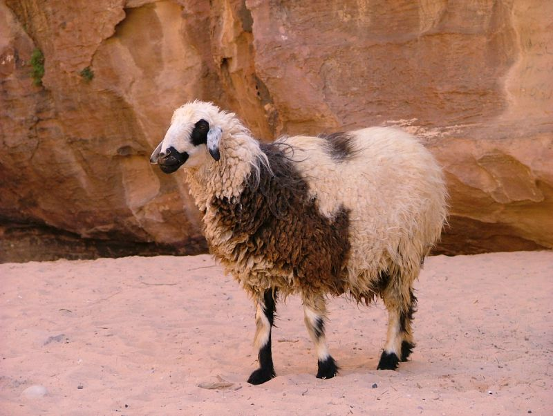 Rencontre dans le Wadi Rum