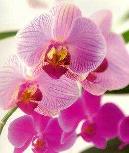 fleurs_170