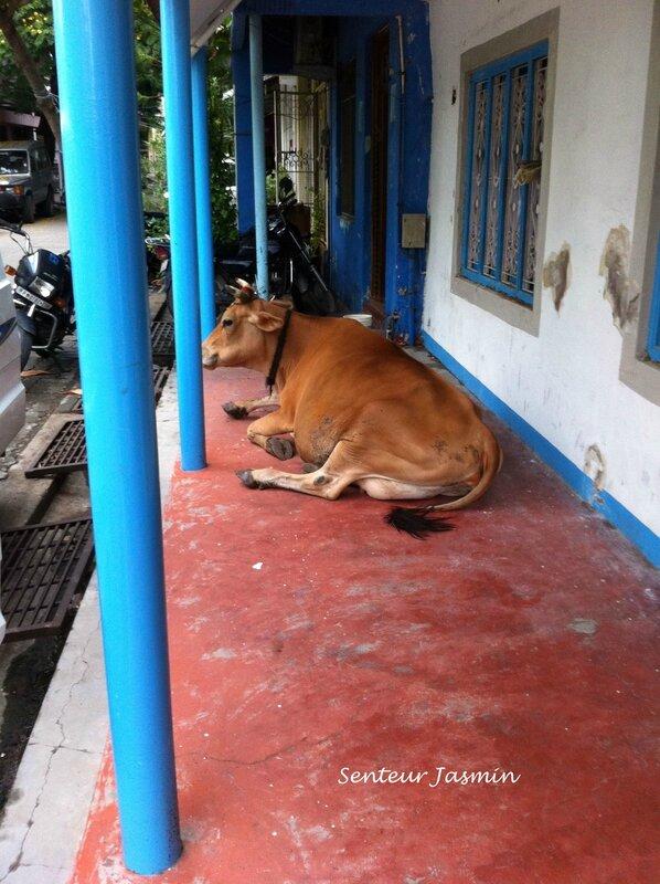IMG_3011la vache