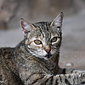 Photos JMP©Koufra 12 - Le Caylar - Chats - 07072019 - 0046