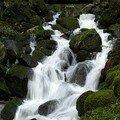Cascades Tendon