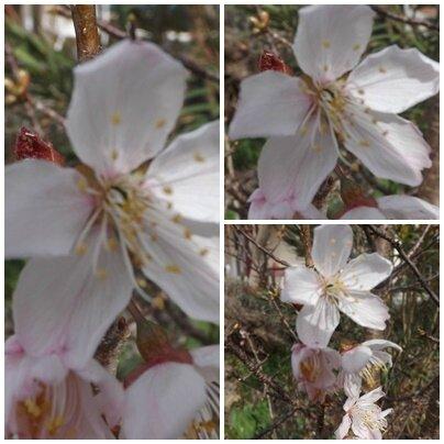 Jardin mars 2016 (10)