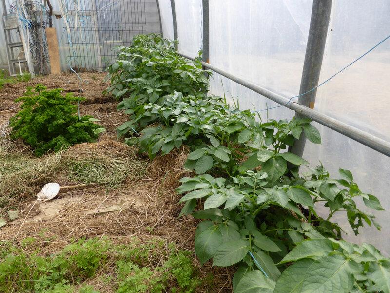 2-serre-pommes de terre (1)