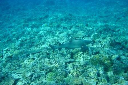 Requin5
