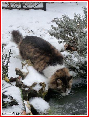 neige_06_01_2010_222