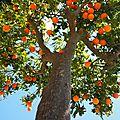 La parabole de l'arbre fruitier