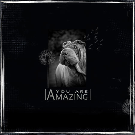 amazing_1200