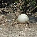 l'œuf dagbegnon de fertilité proposé par le puissant maître marabout tominbina
