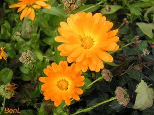 variations_d_orange__4_