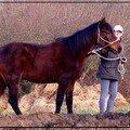 05) 04 Février 2007 - Un kilomètre à pied ...