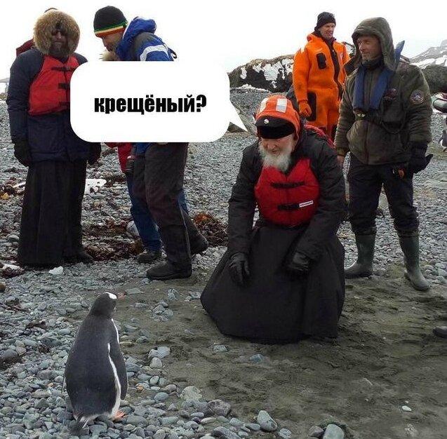 kiril pingouin4
