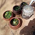 Des travaux occultes pour la promotion professionnelle du puissant maitre marabout koudo aziza
