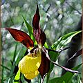 cadre-sabot-orchidee-sallent-de-gallego-29-05-11