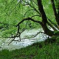 Desman-La forêt du Bager