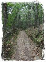 chemin forestier après TINEO