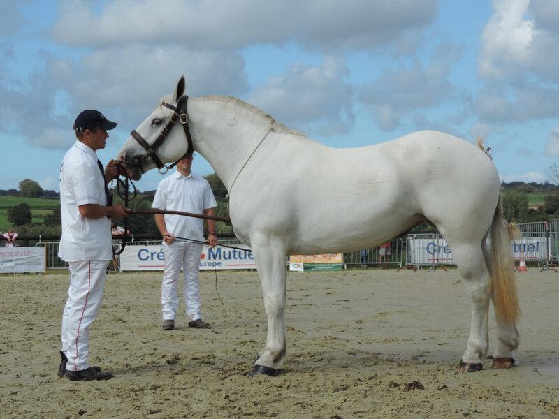 Haquita 2 - 5 Septembre 2020 - National Boulonnais - Samer (62) - 5e (3 ans - Petite Taille (moins d'1m68))