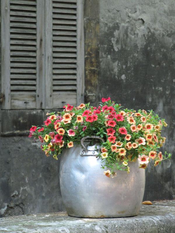 Fleurs_rue_des_Teinturiers___AVIGNON