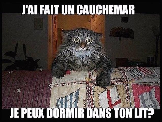 chat_cauchemar
