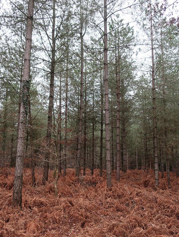 forêt c