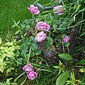Trois défis de mai et quelques fleurs avant l'orage