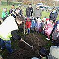 Saint gence : les élèves de l'école maternelle plantent des liquidambars !