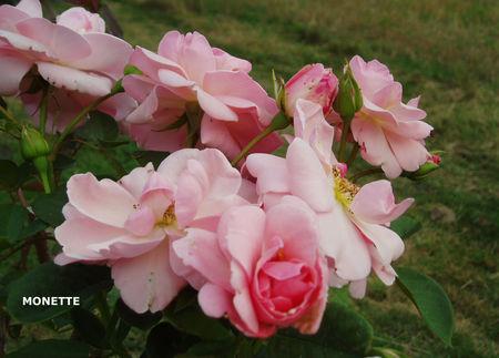 roses_effarouch_es