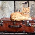 Image du jour - le chat et le dilemme de la valise...