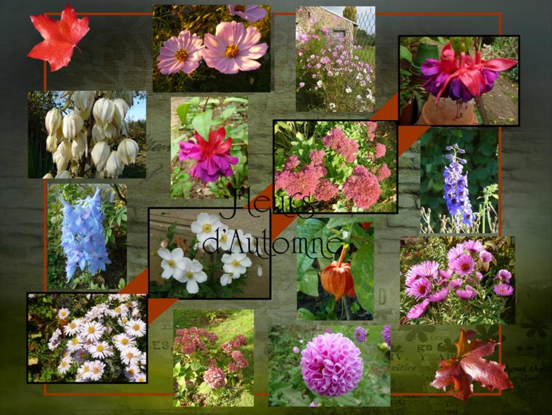 Pêle-mêle de fleurs d'Automne
