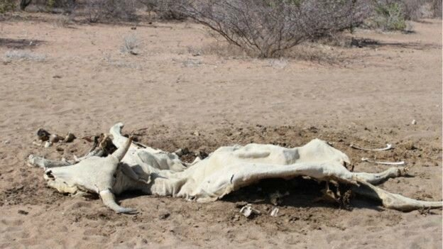 110713130724_africa_drought_pic_1_624x351__nocredit