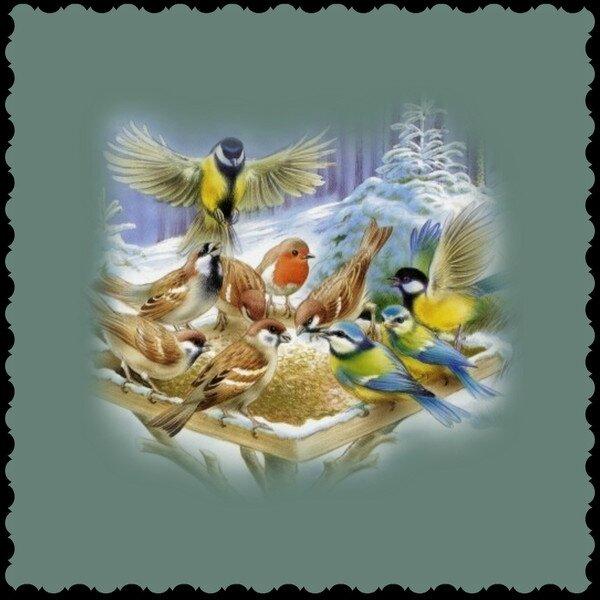 oiseaux mangeoire