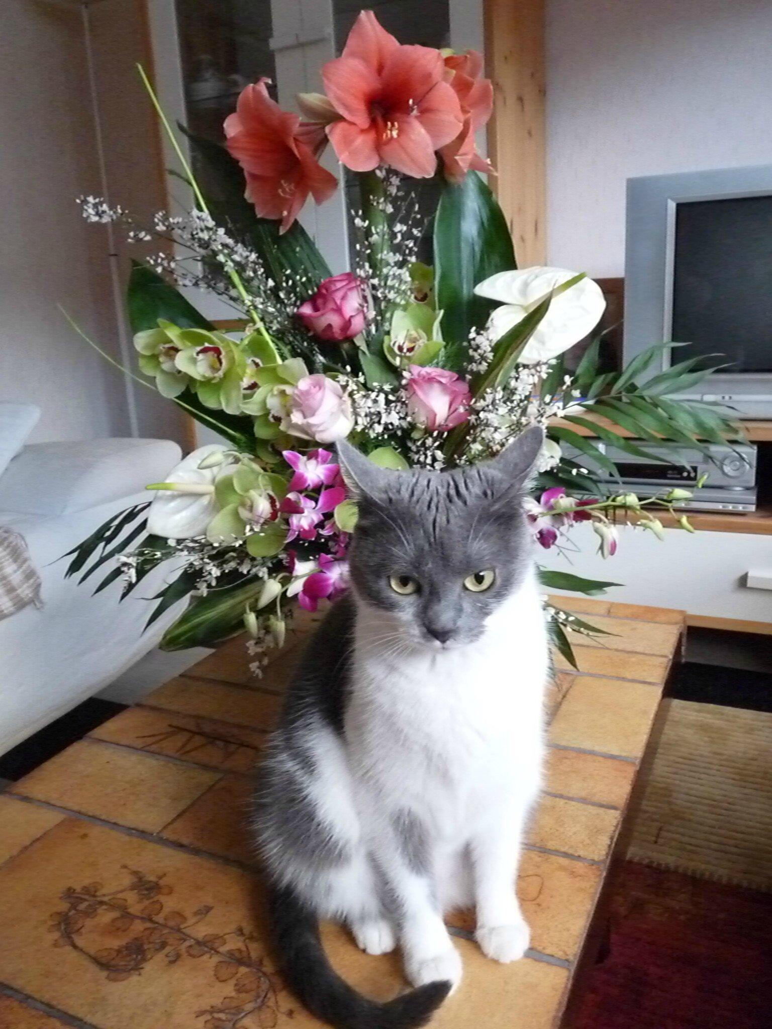 Mes fleurs (8)