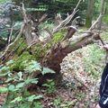 voici des racines .