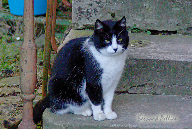 202000206_animaux_chat_04