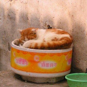 Zhouzhuang37