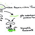 Seconde, chapitre 3: l'adn, une molécule particulière.