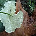 feuilles accrochées