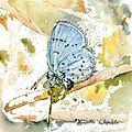 gi-papillon-2-d