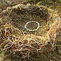 herbes folles rangées yurtao