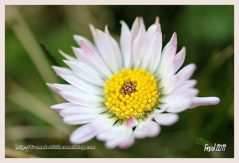 Une fleur parmi les fleurs .. , En passant par la